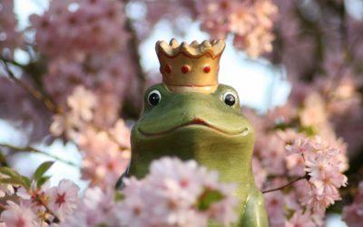 Wie du den Prinzen bekommst, ohne den Frosch küssen zu müssen